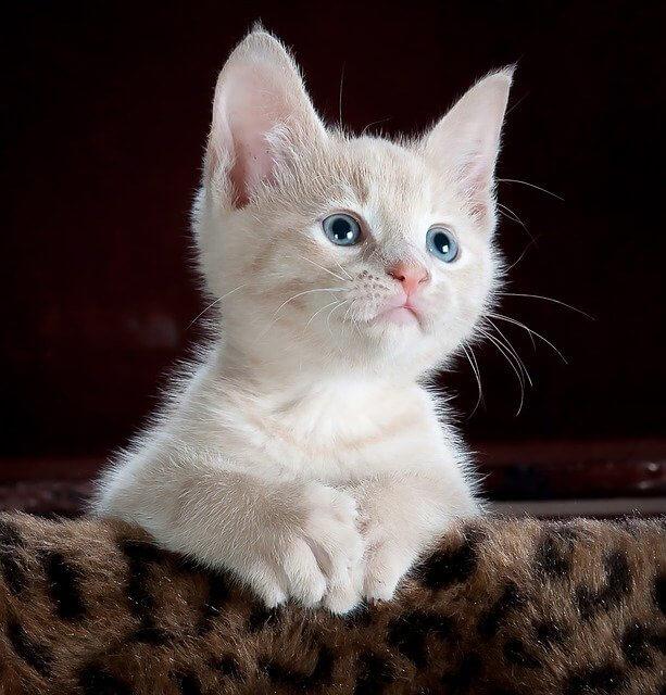 cat-551554_640 (1)